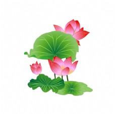 开放的粉色荷花插画图片