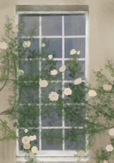 窗外盛开的白蔷薇图片