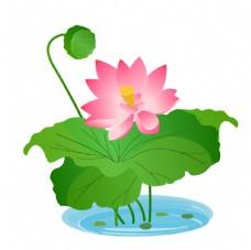 盛开的粉色荷花插画图片