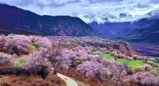 林芝桃花自然风景西藏风景图片