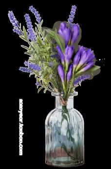 春季鲜花花朵图片