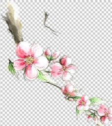 透明底梅花图片
