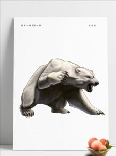 动物北极熊图片