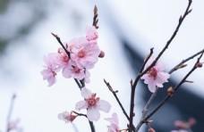 春天盛开的鲜花图片