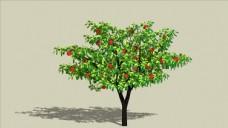 苹果树植物SU模型3D树图片