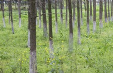 春天的小树林图片