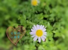 春游小花图片