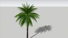 3D植物树木椰子树图片