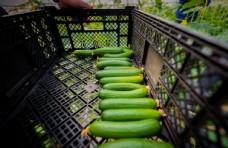 水果黄瓜图片