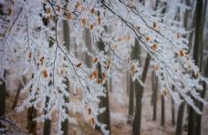冬天树枝图片