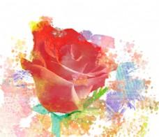 水彩玫瑰图片