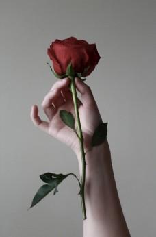 赠人玫瑰手有余香图片