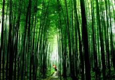 竹海国家森林公园图片
