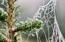 冬日树林的蜘蛛网图片