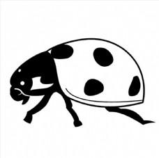 七星瓢虫图片