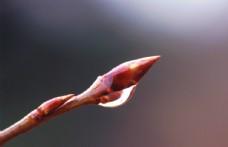 树枝嫩芽水滴图片
