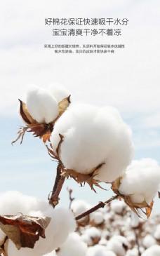 新疆棉图片