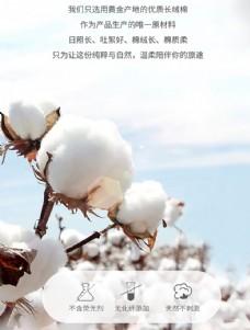 长绒棉图片