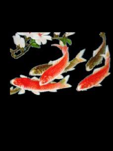 水墨墨迹鲤鱼图片