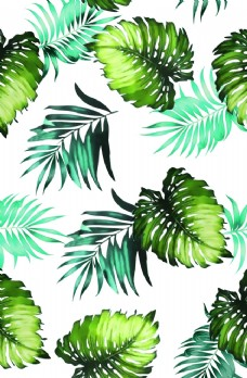 热带花图片