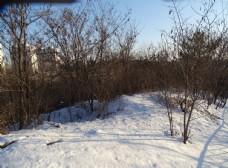 山顶上雪树图片