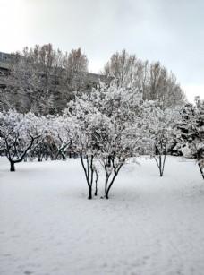 校园雪景图片