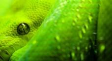 动物眼睛特写图片