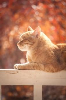 小猫咪图片