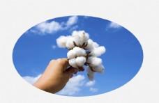 天空棉图片