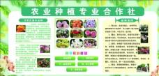 农业种植专业合作社图片