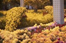 武汉沙湖公园菊展图片