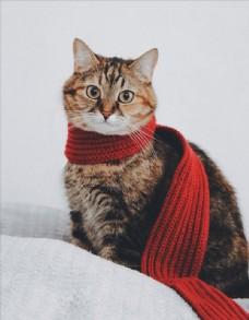 代红围巾的猫图片